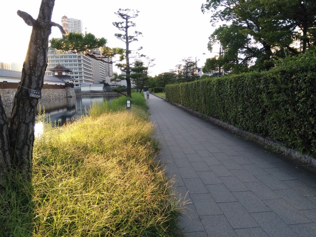 広島城ランニングコース南